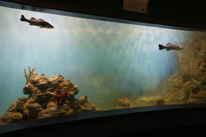 1-wonsan-sogndowon-fish.jpg