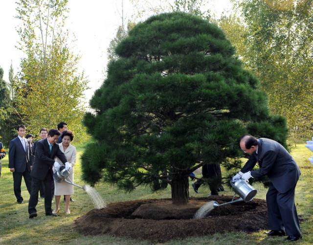 노무현소나무-평양식물원.jpg